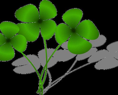 clovers-161400_640